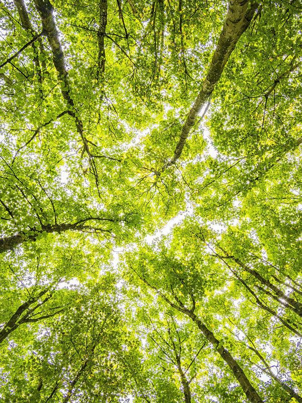 A beautiful green vous aide à réduire votre empreinte carbone